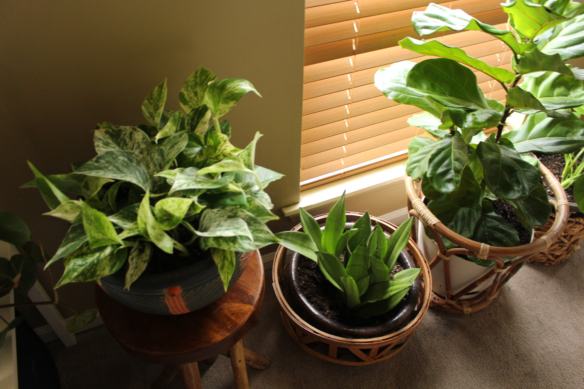 4 Fall Tips for House Plant Care